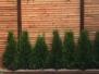 Mauern,Sichtschutz und Zäune